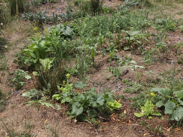 Circular polyculture garden bed