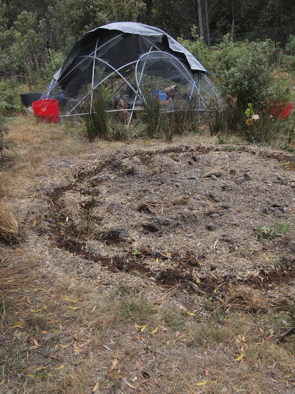 Chook dome and circular garden bed